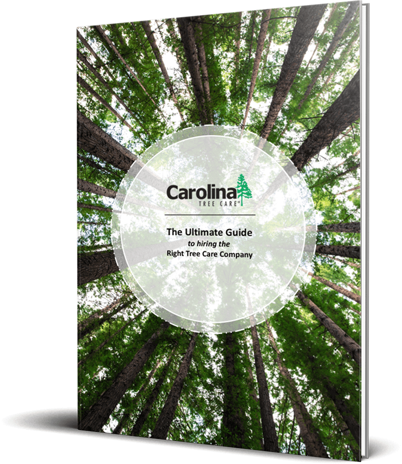 The Ultimate Guide to Hiring the Right Tree Care Company